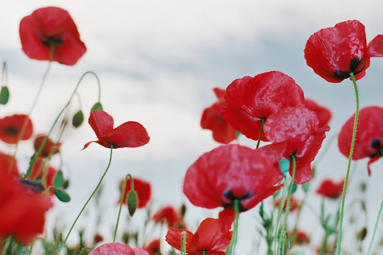 Remembrance Day Around The World In 2020 Office Holidays