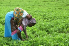 Ghana Farmer's Day