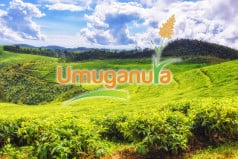 Umuganura Day