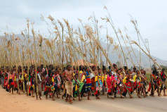 Umhlanga reed dance