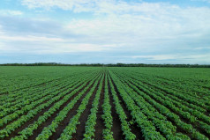 Zambia Farmers' Day