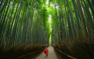 Greenery Day