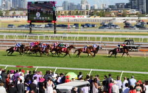 Known as 'the race that stops a nation', the Melbourne Cup is the most prestigious horse race in Australia