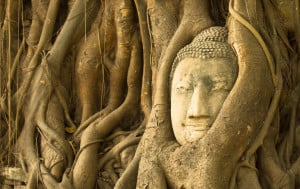 Marks the day when the Lord Buddha delivered his first sermon in India over 2500 years ago