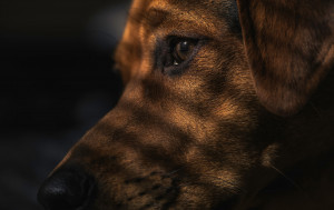 The most common pet name for a dog in Poland is 'Burek' which is the Polish word for a brown-grey colour.