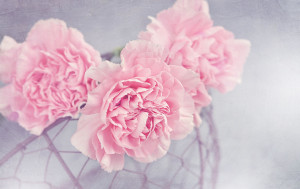 A Mother's day tradition is wearing a carnation. A colored carnation signifies that a person's mother is living while a white carnation is used to honor a deceased mother.