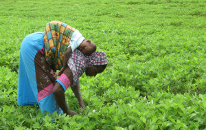 The first Friday of every December is set aside by the government as Farmers' Day and is celebrated as a statutory Public Holiday