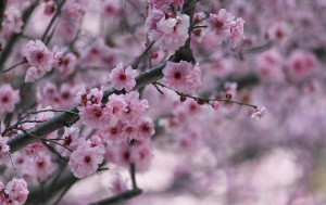 In Japan the vernal equinox is a welcome holiday as it marks the end of winter and the arrival of spring
