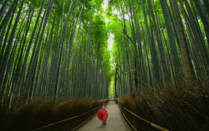 Despite being one of the world's most densely populated countries, 80% of Japan is covered in forest.
