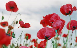 Remembrance Day is held on the second Monday in November to remember those who fell in the two World Wars.