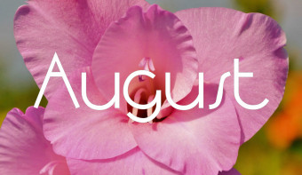 Gladiolus is the traditional flower of August.