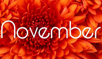 Chrysanthemum is the traditional flower of November.