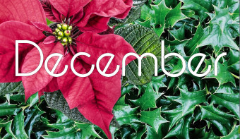 Poinsetta is the traditional flower of December.