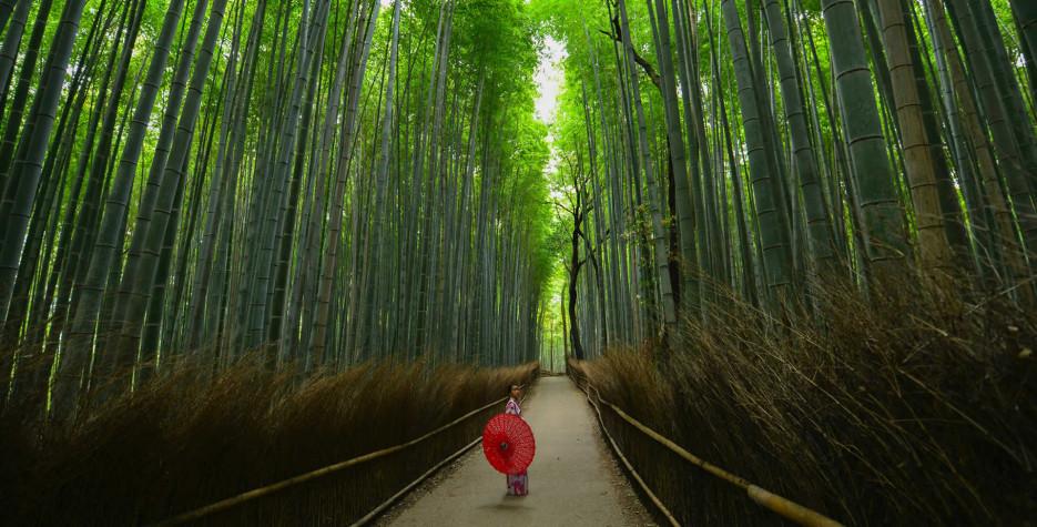 Greenery Day in Japan in 2020