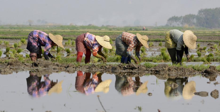 Peasants' Day in Myanmar in 2020