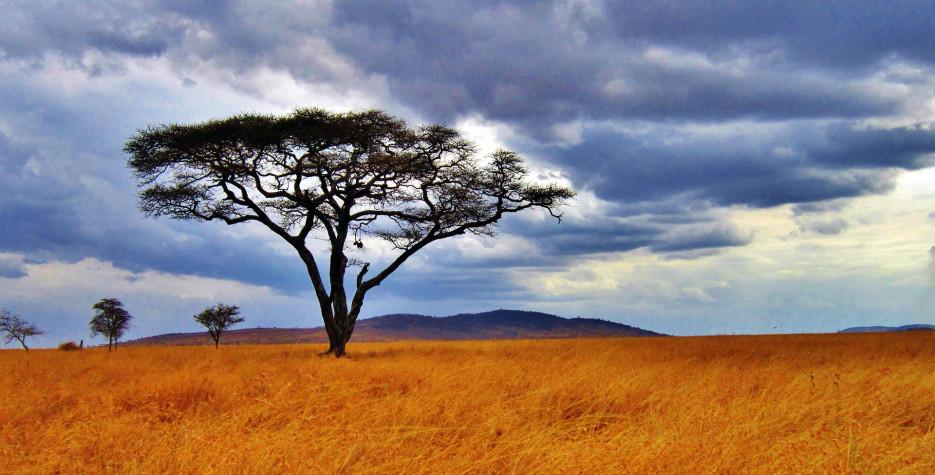 Nane Nane (Farmer's) Day in Tanzania in 2021